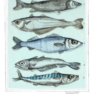 Sea-Fish-Studies-809x1024
