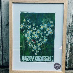 Llygad y dydd frame