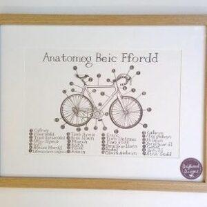 anatomeg beic frame